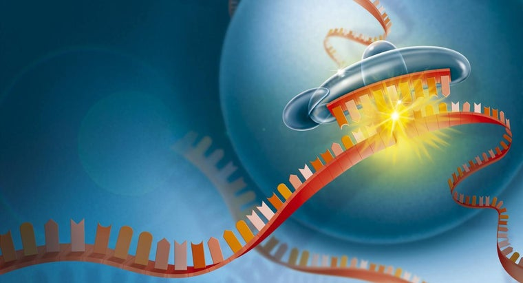 Why Is RNA Important to the Cell?