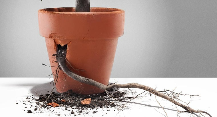 What Does the Root of a Plant Do?
