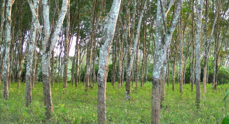 What Is a Rubber Tree Harvester?
