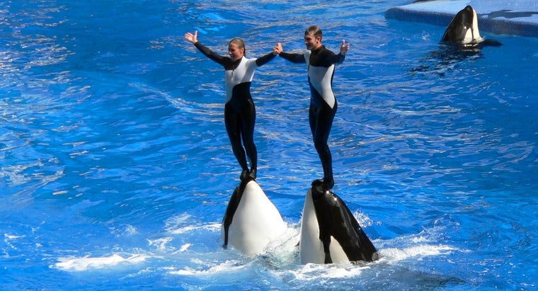 What Is the Salary for Trainers at Sea World?
