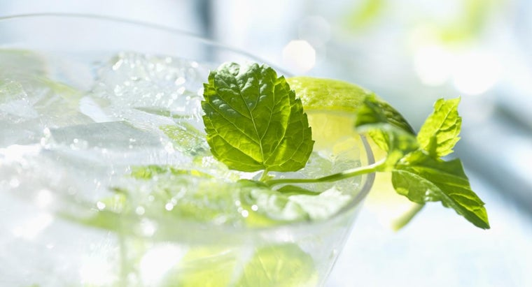 What Is the Scientific Name for Mint?