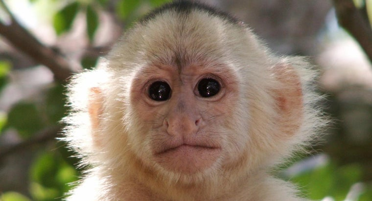 What Is the Scientific Name for a Monkey?