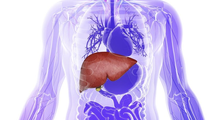 What Is Sclerosis of the Liver?