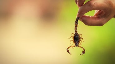 What Are Some Scorpion Adaptations?