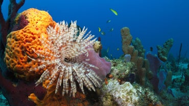 What Do Sea Sponges Eat?