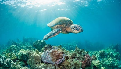 What Is a Sea Turtle's Lifespan?