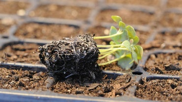 What Is the Seed Germination Process?