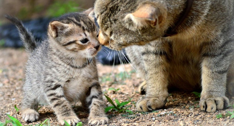 How Do You Separate Kittens From a Mother Cat for Adoption?