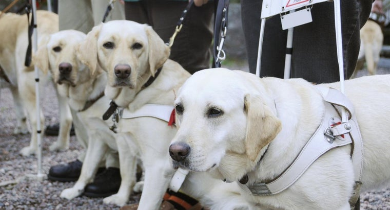 What Do Service Dog Trainers Do?