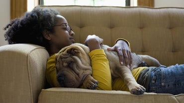 What Is a Shar-Pei Personality Like?