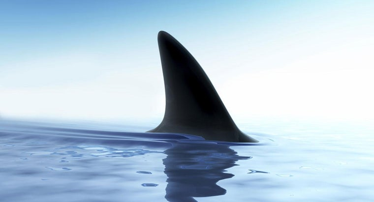 Are There Sharks in the Chesapeake Bay?