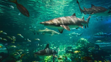 How Do Sharks Adapt to Their Environment?