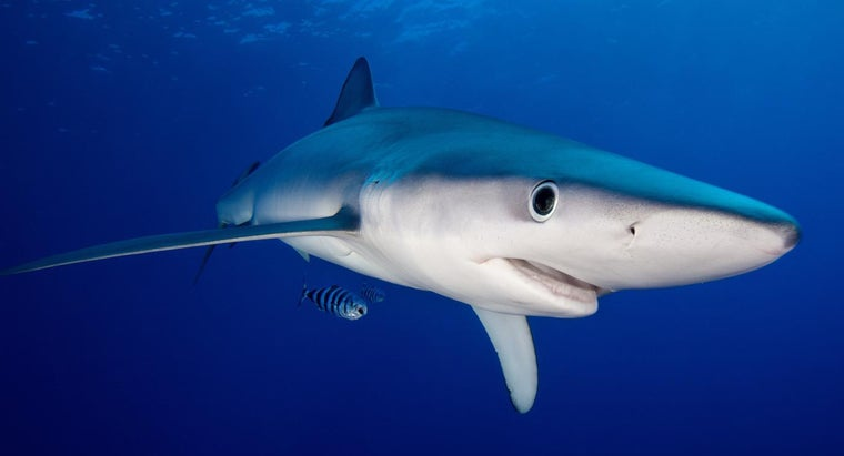 What Do Sharks Represent in Dreams?