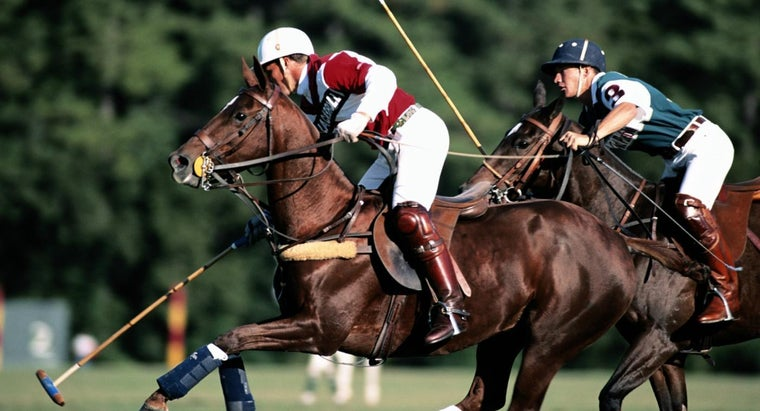 What Should You Wear to a Polo Match?