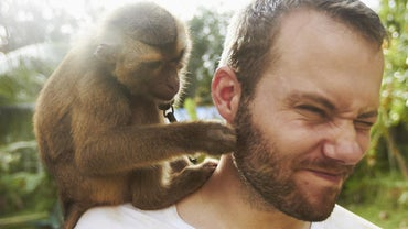 What Similarities Are Present in Monkeys and Humans?
