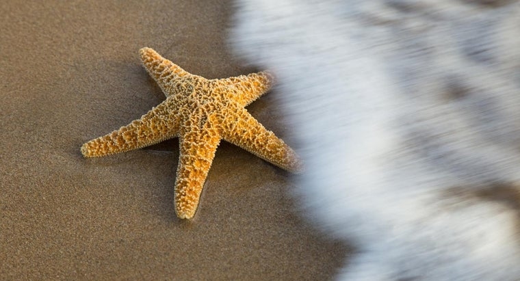 What Size Are Starfish?