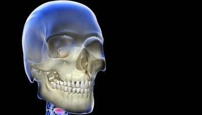 What Does the Skeletal System Consist Of?