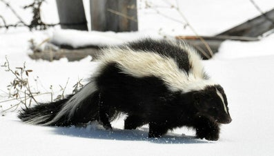 Smell removal for How to get skunk smell out of car interior