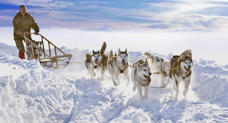 How Are Sled Dogs Trained?