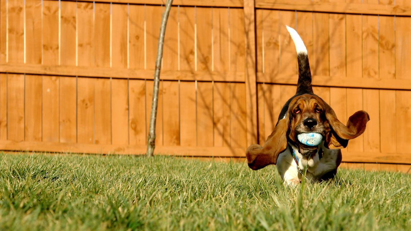 What Is the Slowest Dog Breed?
