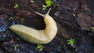 Are Slugs Harmful to Dogs?