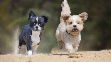 Which Small Dog Breeds Weigh Under 5 Pounds?