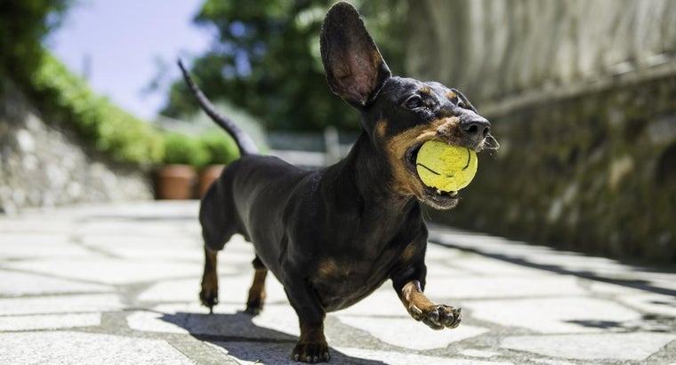 What Are Some Small Dog Breeds?