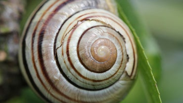 How Do Snail Shells Grow?
