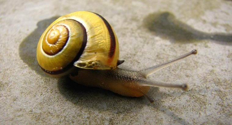 Are Snails Insects?