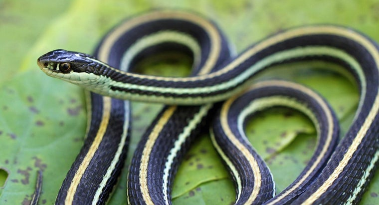 How Do Snakes Adapt to Their Environment?