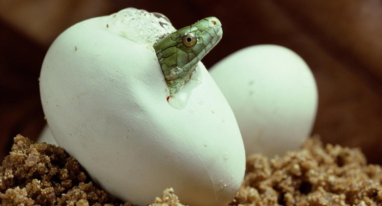 Do Snakes Care for Their Young?