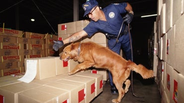 How Are Sniffer Dogs Trained?