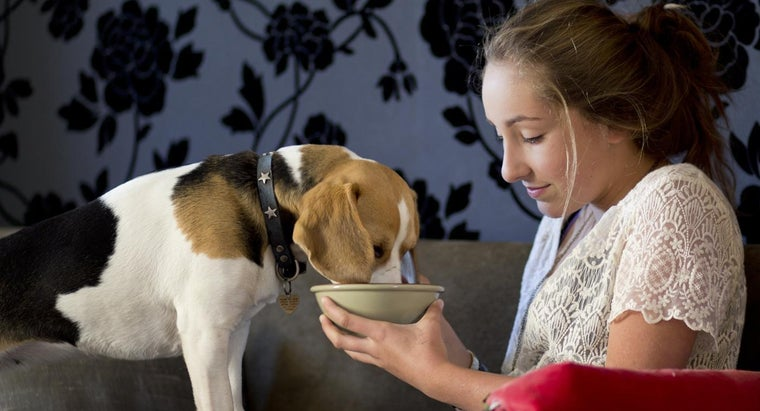 How Soon Should You Feed a Dog After It Gives Birth?