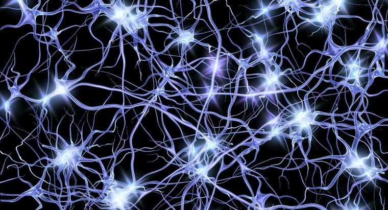 What Is the Space Between the Neuron and the Muscle?