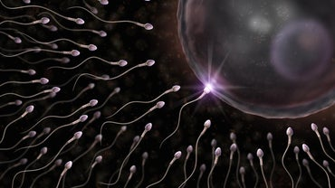 Why Does a Sperm Cell Have a Tail?