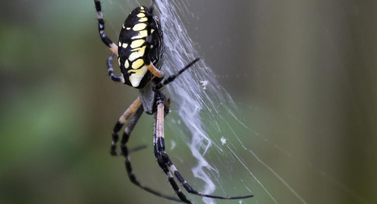What Do Spiders Eat?