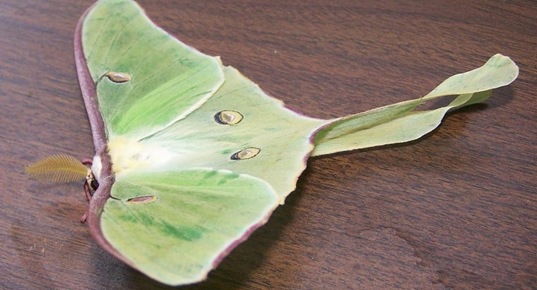 What Is The Spiritual Meaning Of Luna Moths Reference