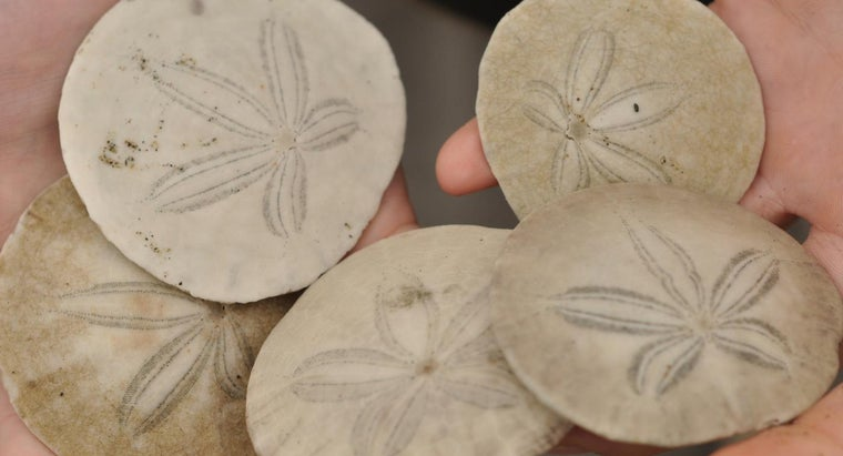 What Is the Spiritual Meaning of Sand Dollars?