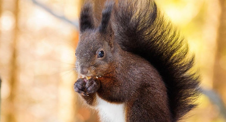 What Do Squirrels Eat and Drink?