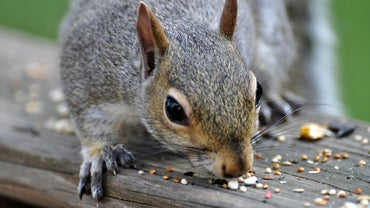 What Do Squirrels Like to Eat?