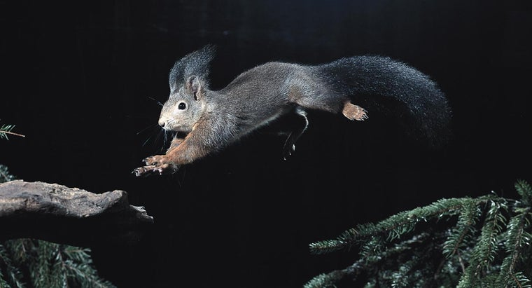 Where Do Squirrels Go at Night?