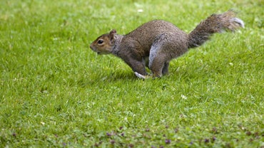 How Do Squirrels Protect Themselves?