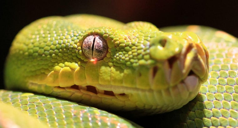 At What Stage of Maturation Are Snakes Most Poisonous?