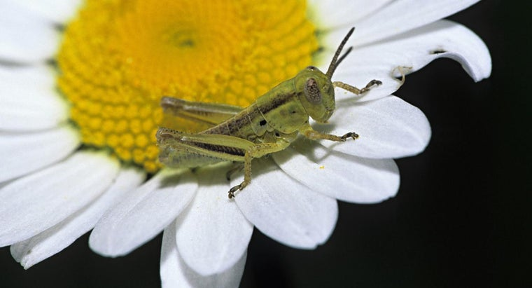 What Are The Stages In The Life Cycle Of A Grasshopper Reference