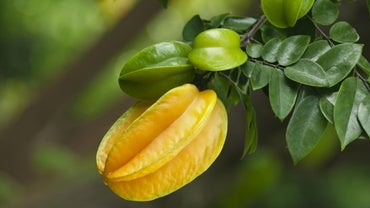 Where Does Star Fruit Grow?
