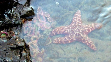 Where Are Starfish Found?