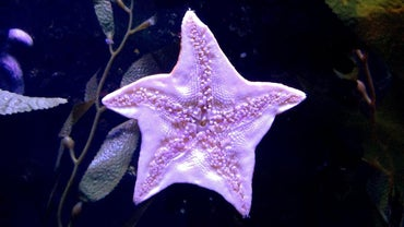 How Does a Starfish Protect Itself?