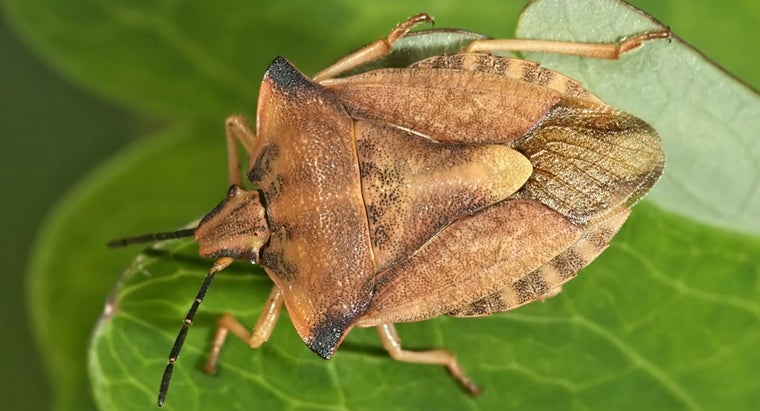 When Is Stink Bug Season?