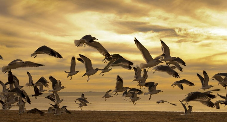 What Is a Group of Seagulls Called?