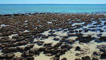 What Are Stromatolites?